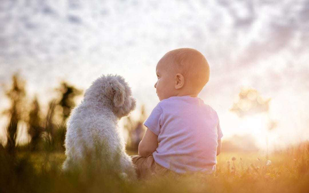 Dogs may lower risk of childhood eczema, reduce asthma symptoms