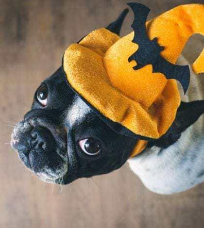 Halloween's Most Haunting Pet Health Hazards