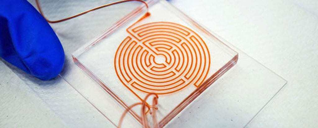 This Awesome Blood Labyrinth Is The Newest Method For Catching Cancer Cells